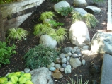 Shade garden with boulders